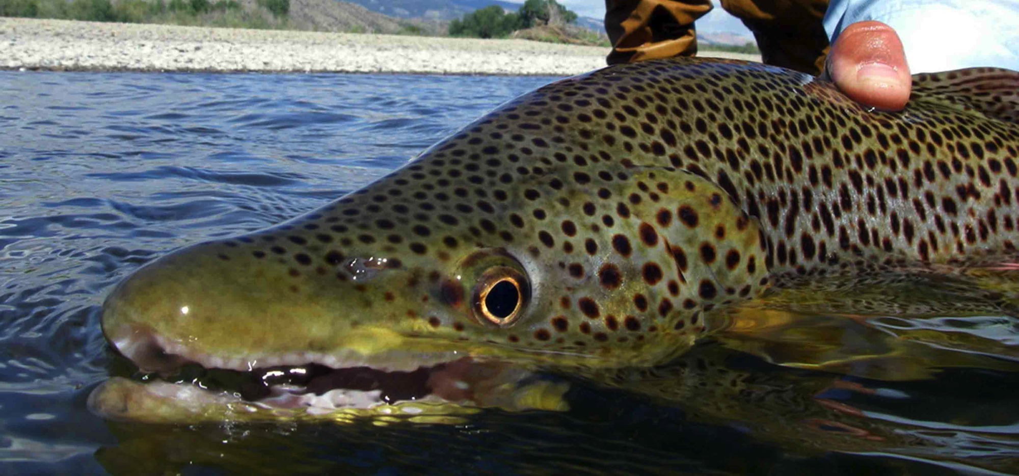 Fly fishing trips for beginners experts 406 763 4465 for Bozeman mt fly fishing